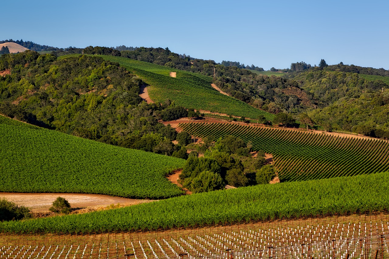 A Toast To California's Wine Country