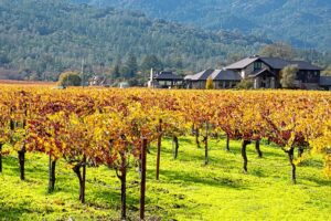 California Wine Country Will Rise Again